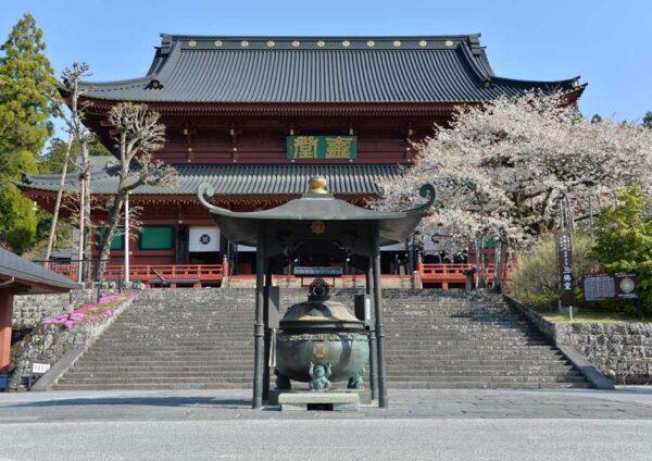 2021年4月20日(火)金剛桜が見頃を迎えました。